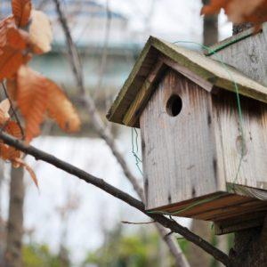 画像:鳥小屋